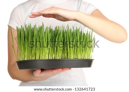 Hands protects growing grass isolated on white - stock photo