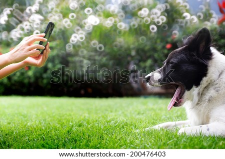 Hands taking photo of pet with smartphone. - stock photo