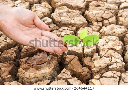hands watering a tree on cracked earth / love nature - stock photo