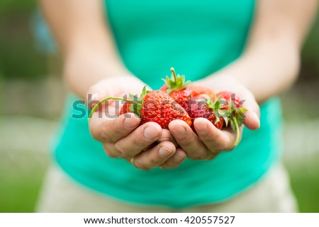 hands with fresh strawberries collected in the garden - stock photo