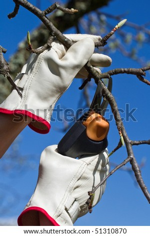 Hands with secateurs pruning trees in spring - stock photo