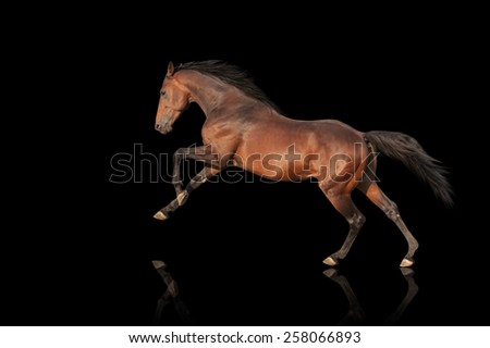 handsome brown stallion galloping, jumping. Thoroughbred horse isolated on black background - stock photo