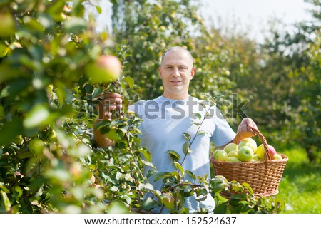 Handsome guy with basket of harvested apples in garden - stock photo