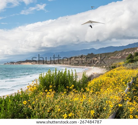 Hang gliders, parasailing and paragliding along the Pacific coast in Carpinteria, California.   - stock photo