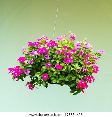 Hanging basket of flowers stock photo Hanging basket flowers