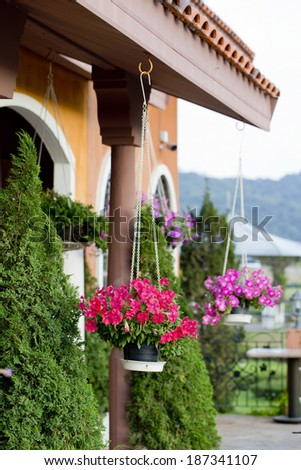 Hanging baskets of flowers at the front porch. Landsc - stock photo