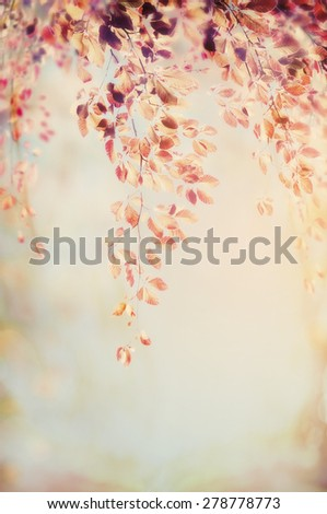 hanging branch with autumn foliage on blurred nature background, patel retro color toned - stock photo