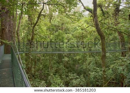 Hanging bridges in Monteverde rain forest - stock photo