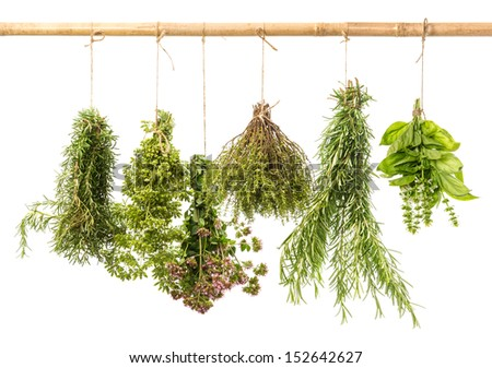 hanging bunches of fresh herbs isolated on white background. rosemary, basil, thyme, oregano, marjoram - stock photo