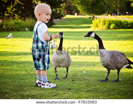 Happy and positive baby boy feeding geese in local park. Catheter on a right arm is visible and it's used for treating kids with cancer. Focus is on back bird, and boy might be soft viewed at 100%. - stock photo