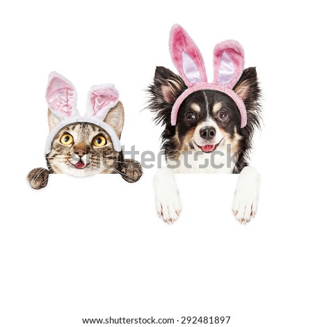 Happy and smiling tabby cat and Chihuahua crossbreed dog with paws over a blank sign wearing Easter bunny ears - stock photo