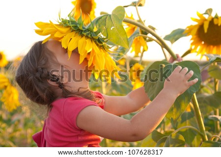 Happy baby smelling big sunflower on summer field. Unity with nature - stock photo
