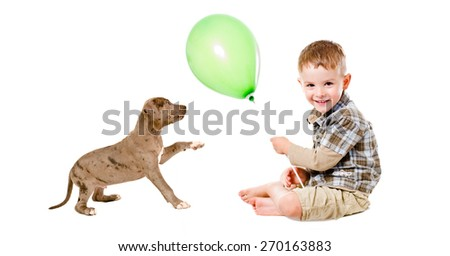 Happy boy and puppy pit bull playing with a balloon isolated on white background - stock photo