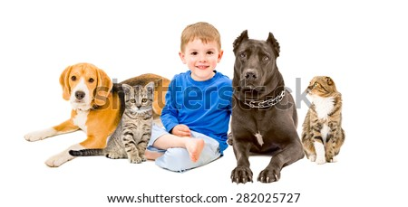 Happy boy, cats and  dogs sitting together isolated on a white background - stock photo