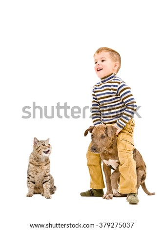 Happy boy playing with a puppy pitbull and cat isolated on white background - stock photo