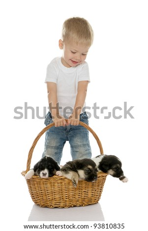 Happy boy with puppies in a basket.  isolated on white background - stock photo