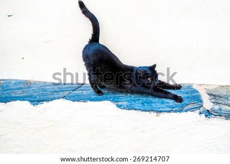Happy cat in Catalonia, Spain - stock photo