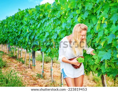 Happy cute young winemaker picking big bunch of ripe grapes into the hat, Italian wine production, autumn harvest season concept - stock photo