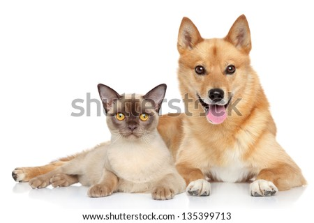 Happy dog and cat together on a white background - stock photo