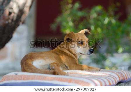 Happy dog lies on a rug under a tree on the island of Santorini Greece - stock photo