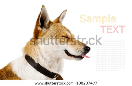 Happy Dog Portrait. isolated on white background with sample text - stock photo