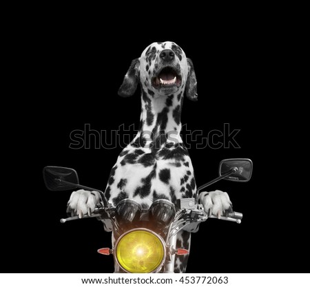 happy dog rides on a motorcycle -- isolated on black - stock photo