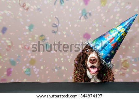 happy dog wearing a new year party hat with confetti falling - stock photo