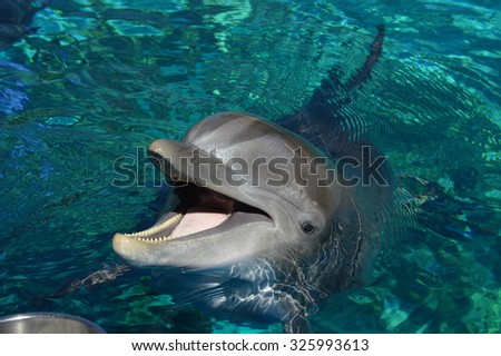 Happy Dolphin - stock photo