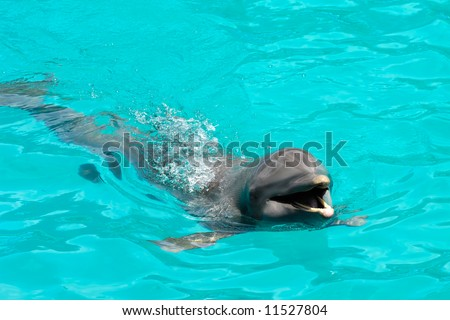 Happy dolphin swimming in blue water - stock photo