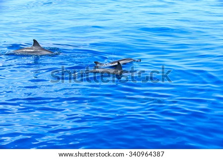 happy dolphins in the water - stock photo