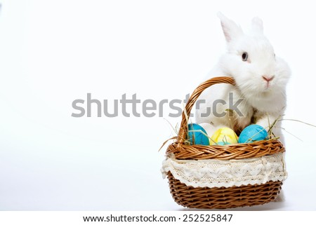 Happy Easter. Closeup image of a cute white bunny holding with paws the cane basket full of colored Easter eggs isolated on white background - stock photo