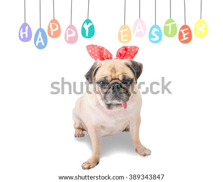 Happy Easter. Dog Pug wearing rabbit bunny ears sitting near pastel colorful of eggs with copy space. - stock photo