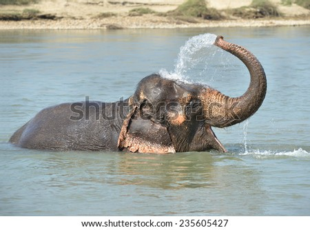 Happy elephant bathing in river - stock photo
