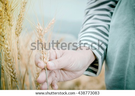 Happy family: a young beautiful pregnant woman walking in the wheat orange barley field on a sunny summer day. - stock photo