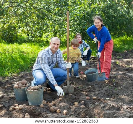 Happy family harvesting potatoes in field - stock photo