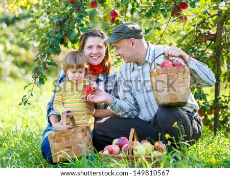 happy family harvests of red apples - stock photo