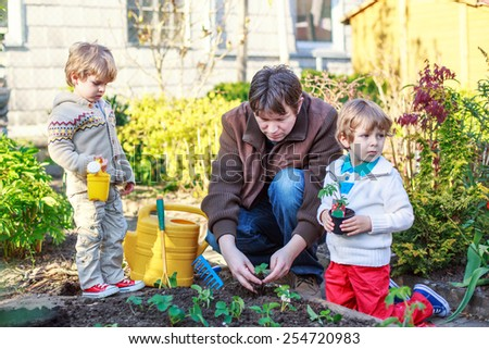 Happy family of three: Two little boys and father planting seeds and seedlings in vegetable garden, outdoors Active leisure with kids, learning gardening and environment. - stock photo