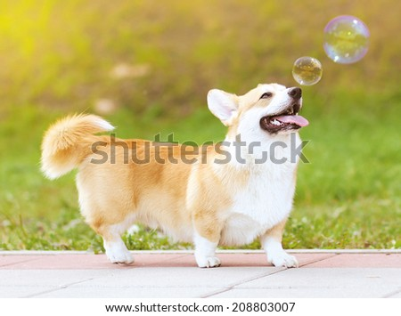 Happy fun dog and soap bubbles - stock photo