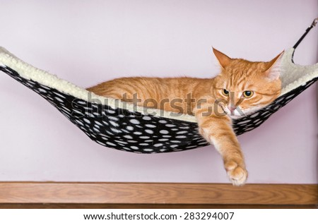 Happy ginger cat lying in a fur hammock - stock photo