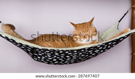 Happy ginger cat sleep in a fur hammock - stock photo