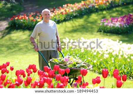 Happy healthy senior man doing gardening works in beautiful floral park - active retirement concept - stock photo