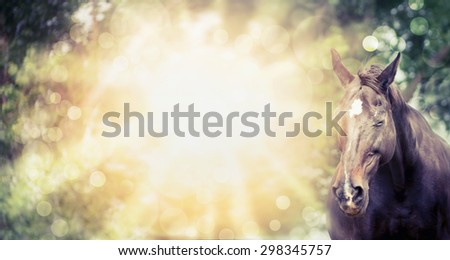 Happy horse on summer or autumn background with tree and sunlight. Banner for website. - stock photo