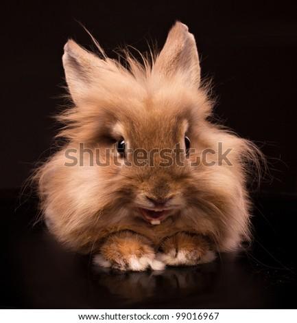 happy little rabbit on black background - stock photo