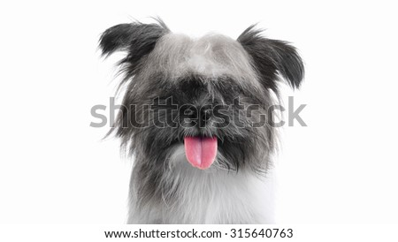 Happy long haired puppy dog smiling, selective color focus on tongue - stock photo