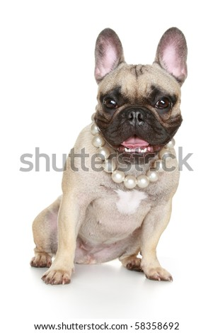 Happy puppy in a beads sits on a white background - stock photo