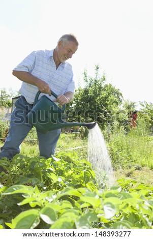Happy senior man watering plants in allotment - stock photo