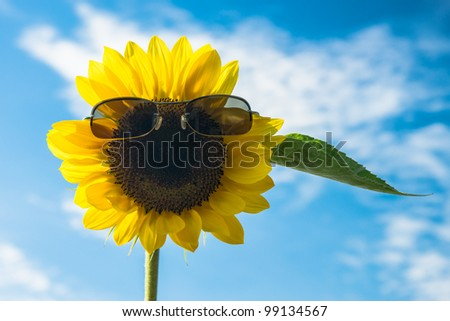 Happy smiling sunflower against blue sky - stock photo