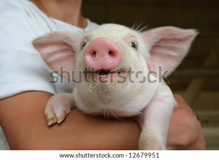 happy young pig - stock photo