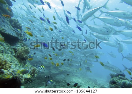 hard coral with fishes and jack fishes - stock photo