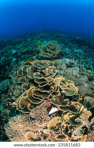 Hard corals on a healthy tropical coral reef - stock photo